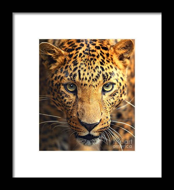 Big Framed Print featuring the photograph Leopard Portrait by Kyslynskahal
