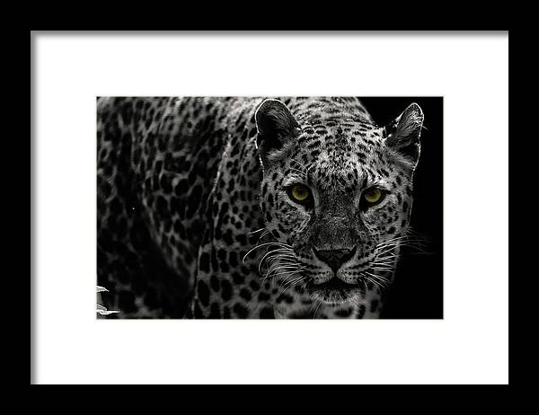 Big Cat Framed Print featuring the photograph Leopard by Somak Pal