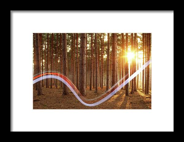 Environmental Conservation Framed Print featuring the photograph Light Swoosh In Woods by Tim Robberts