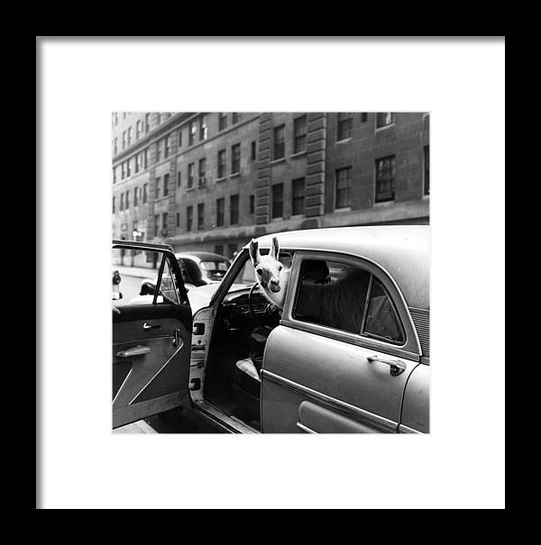Out Of Context Framed Print featuring the photograph Linda Llama by Ecell