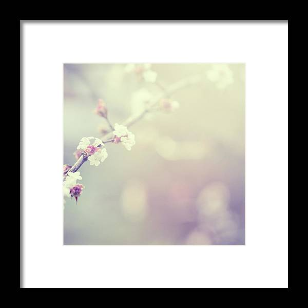Silence Framed Print featuring the photograph Little Flowers In Winter by Rike