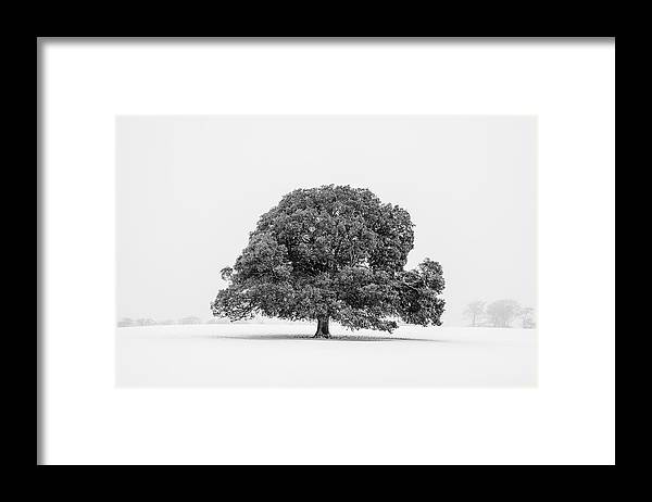 Scenics Framed Print featuring the photograph Lone Holm Oak Tree In Snow, Somerset, Uk by Nick Cable