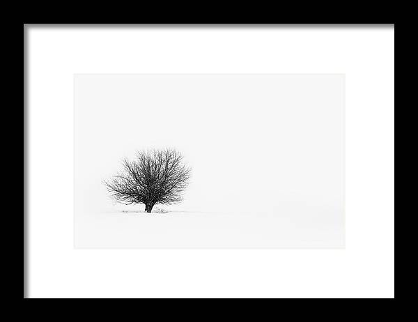 Tranquility Framed Print featuring the photograph Lone Tree by Jrj-photo