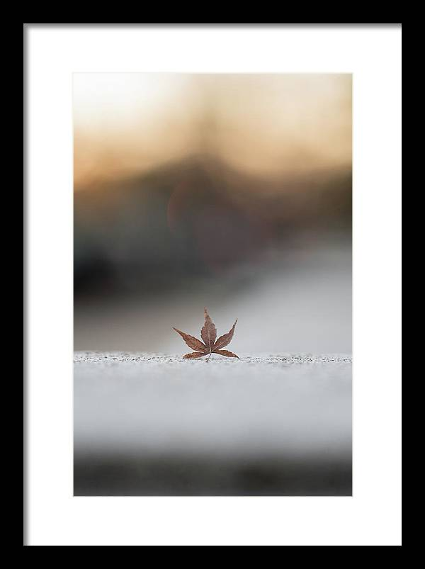 Fall Leaf Framed Print featuring the photograph Lonely Fall Leaf by Doug Ash