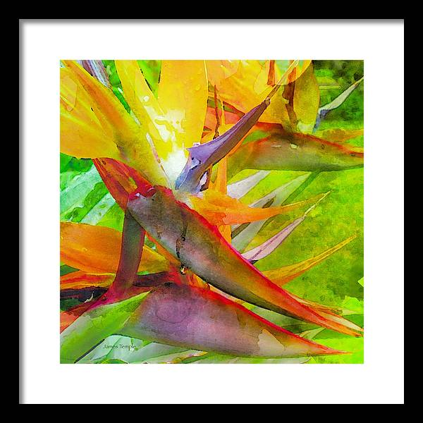 Tropical Framed Print featuring the digital art Tropical by James Temple