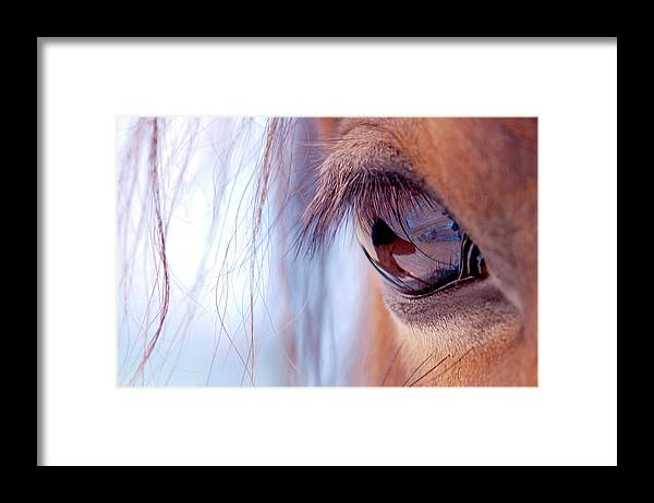 Horse Framed Print featuring the photograph Macro Of Horse Eye by Anne Louise Macdonald Of Hug A Horse Farm