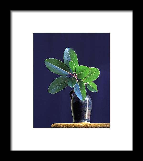 Vase Framed Print featuring the photograph Madrone Tree Leaves In Vase On Table by Diane Miller
