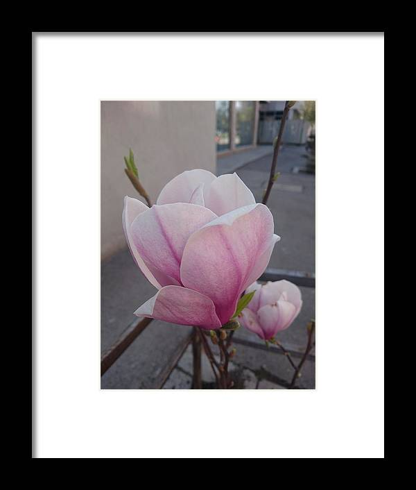 Framed Print featuring the photograph Magnolia by Anzhelina Georgieva