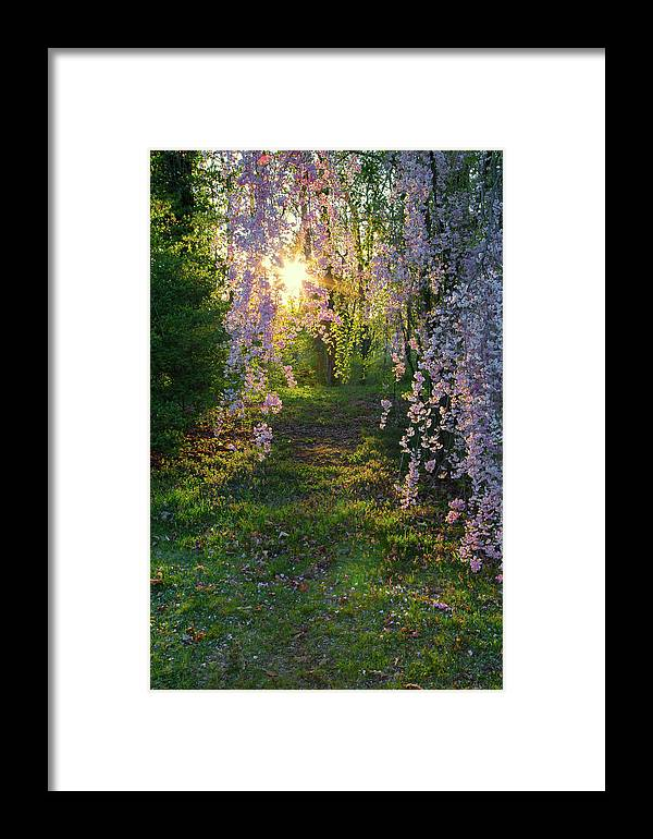 Landscape Framed Print featuring the photograph Magnolia Tree Sunset by Nathan Bush