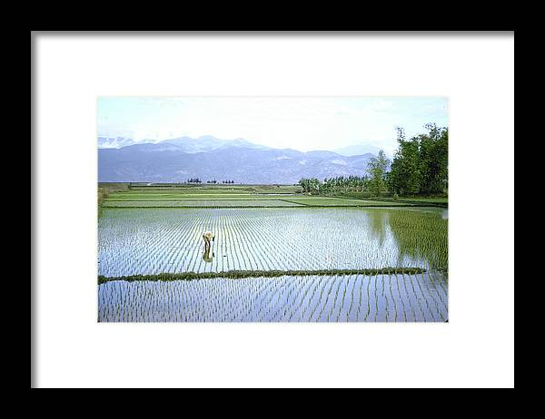 Working Framed Print featuring the photograph Man Working In Paddies Of Prob. Soy Bean by John Dominis