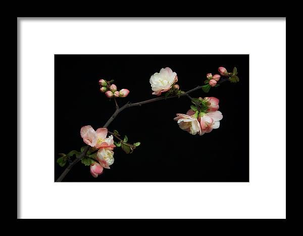 Manzano Framed Print featuring the photograph Manzano Silvestre En Flor by Antonio Rodr�guez Maldonado