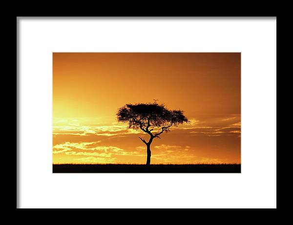 Tranquility Framed Print featuring the photograph Masai Mara National Game Reserve, Kenya by William Manning