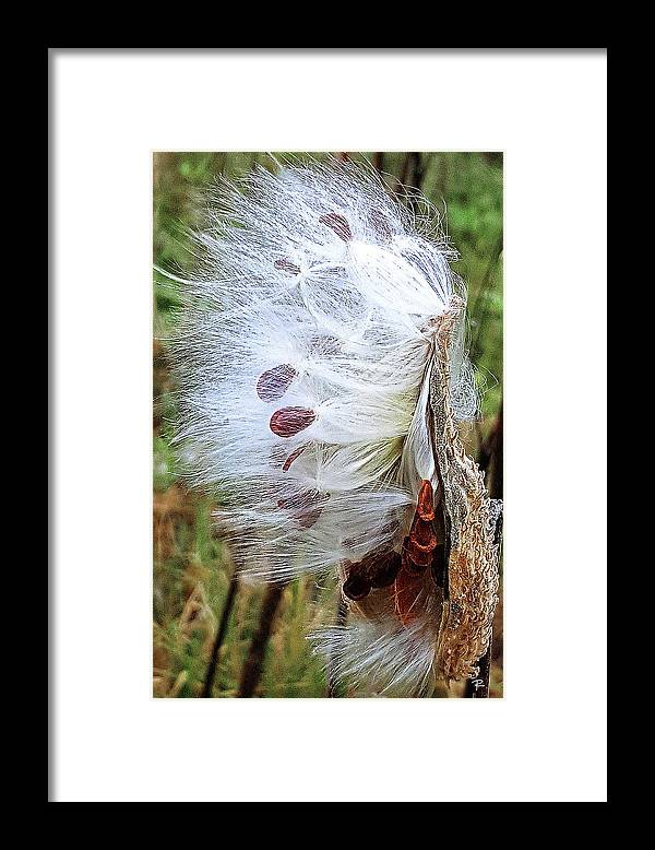 Nature Framed Print featuring the photograph Milkweed by Tom Romeo
