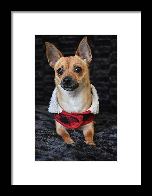 Chihuahua Framed Print featuring the digital art Miracle by Cassidy Marshall