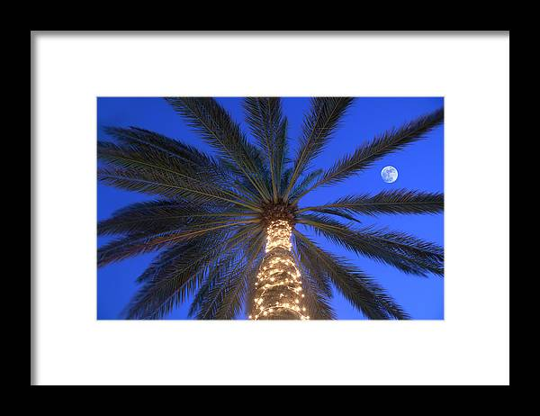 Tranquility Framed Print featuring the photograph Moonrise Near Lit-up Palm Tree by Grant Faint