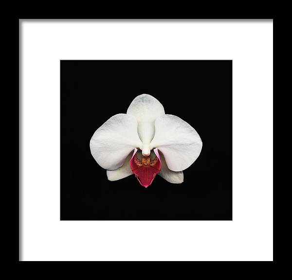 Black Background Framed Print featuring the photograph Moth Orchid Against Black Background by Mike Hill