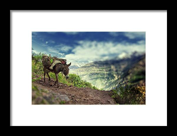 Working Animal Framed Print featuring the photograph Mountain Donkey by By Kim Schandorff