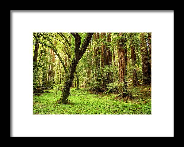 Tranquility Framed Print featuring the photograph Muir Woods Forest by By Ryan Fernandez