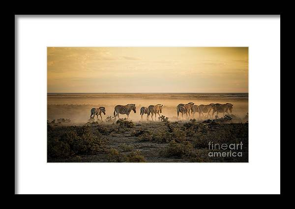 Dawn Framed Print featuring the photograph Namibia, Etosha National Park, Herd by Westend61