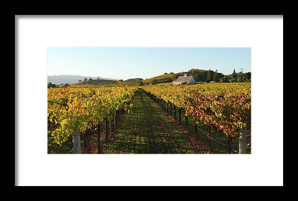 Scenics Framed Print featuring the photograph Napa Valley Vineyard In Autumn by Leezsnow