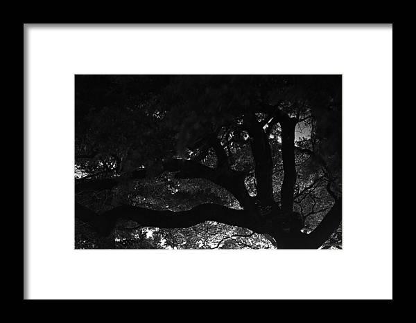 Oak Tree At Night Framed Print featuring the photograph Oak Tree At Night by Edward Swearingen