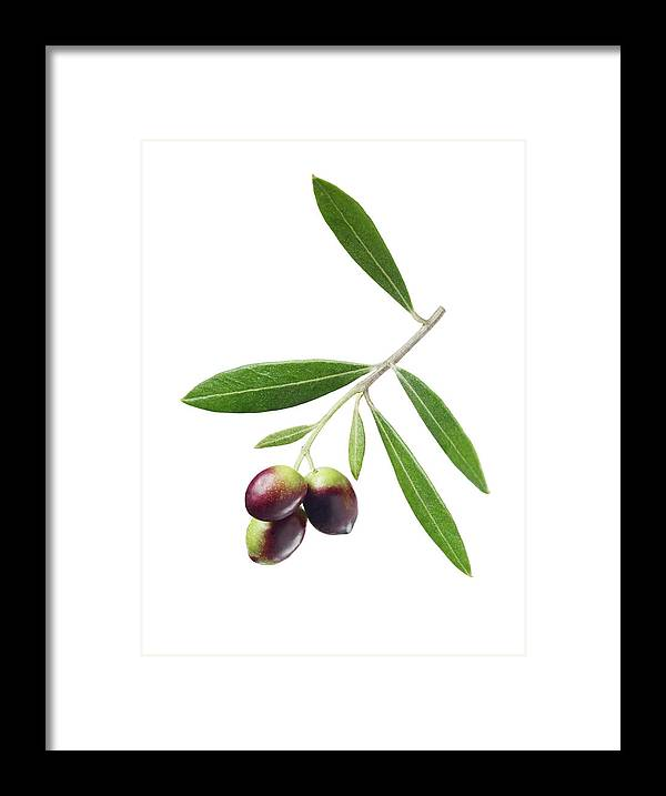 White Background Framed Print featuring the photograph Olives On Branch by Lauren Burke