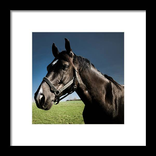 Horse Framed Print featuring the photograph On The Meadow by Pixalot