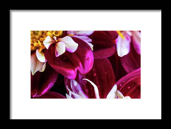 Closeup Framed Print featuring the photograph One Strand by Onyonet Photo Studios