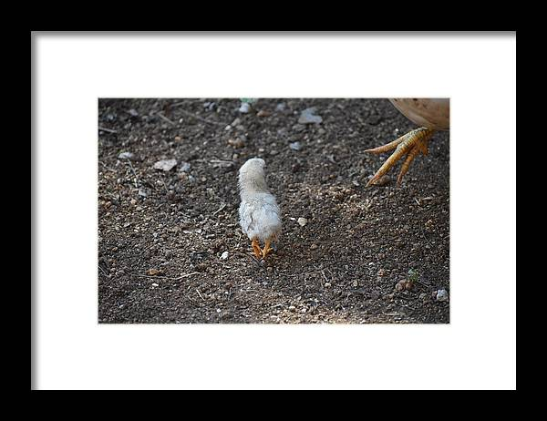 Baby Chick Framed Print featuring the digital art Orange Feet by Cassidy Marshall