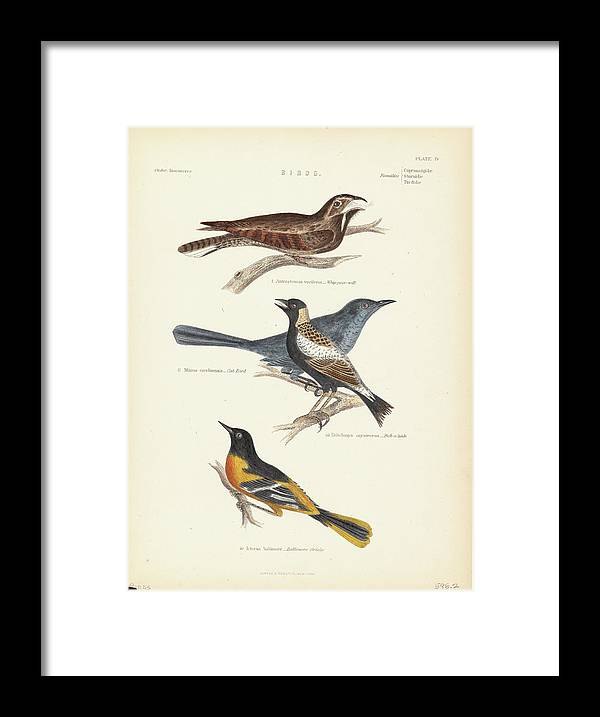 Music Framed Print featuring the photograph Order Passeriformes by Kean Collection