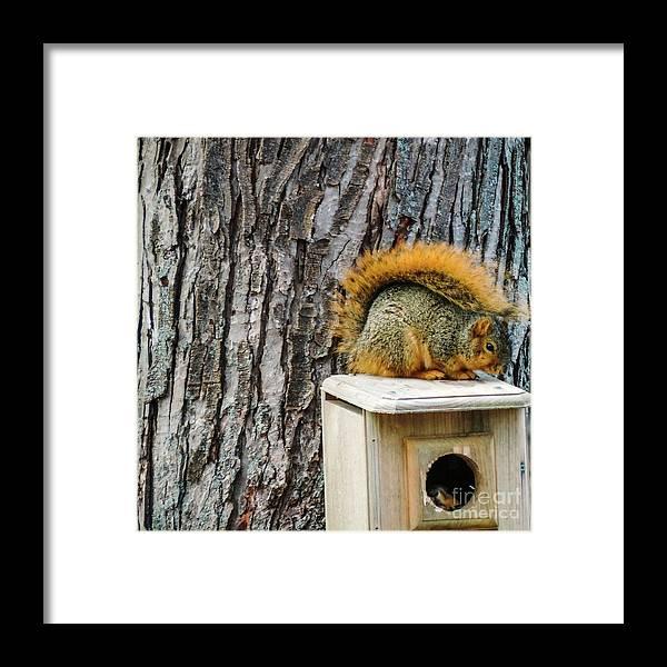 Fox Squirrel Framed Print featuring the photograph Owl House Thief by Randy J Heath