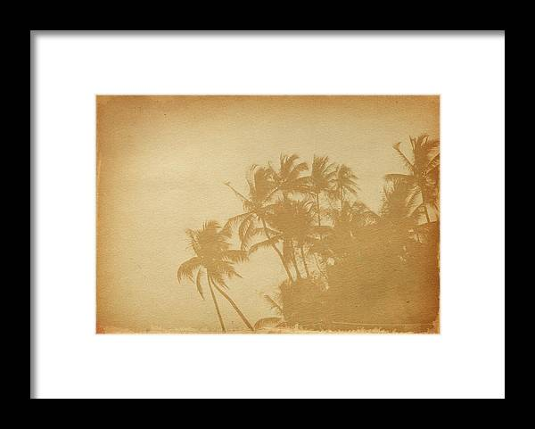 Aging Process Framed Print featuring the photograph Palm Paper by Nic taylor