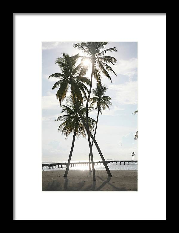Tropical Tree Framed Print featuring the photograph Palm Trees On A Beach by Win-initiative
