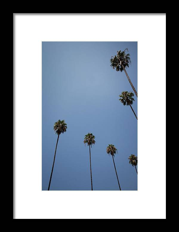 Tranquility Framed Print featuring the photograph Palm Trees by Tuan Tran