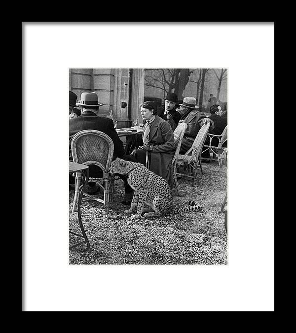 Pets Framed Print featuring the photograph Pet Cheetah by Alfred Eisenstaedt