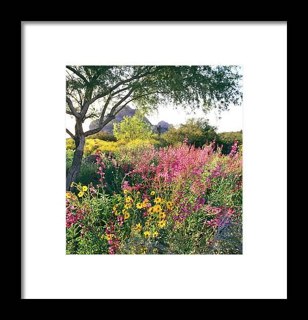 Scenics Framed Print featuring the photograph Phoenix Botanical Gardens by Richard Felber