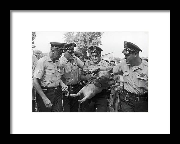 Candidate Framed Print featuring the photograph Pigasus Arrested by Fred W. McDarrah