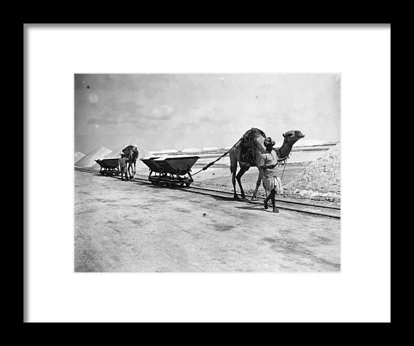 Working Animal Framed Print featuring the photograph Pillars Of Salt by Topical Press Agency