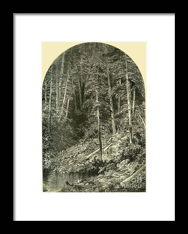 Engraving Framed Print featuring the drawing Pine Forest On West Branch by Print Collector