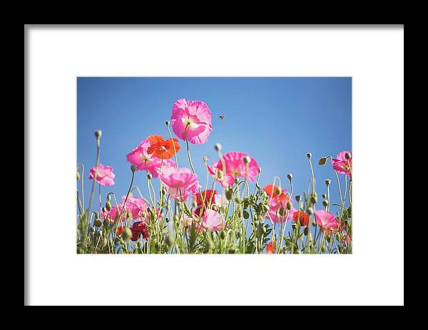 Snow Framed Print featuring the photograph Pink Flowers Against Blue Sky by Design Pics/craig Tuttle