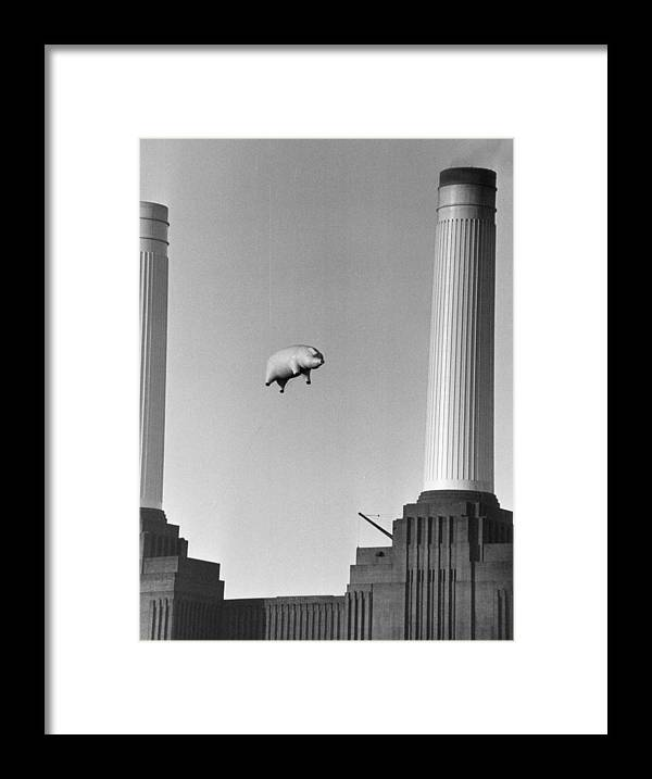 Pig Framed Print featuring the photograph Pink Floyds Pig by Keystone