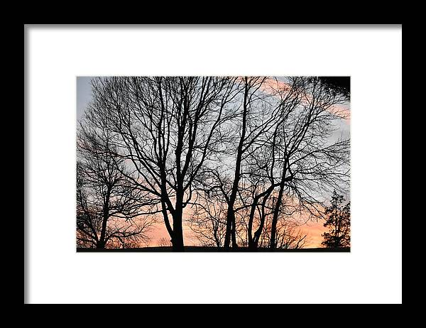 Trees Framed Print featuring the photograph Pink Sky by Cassidy Marshall