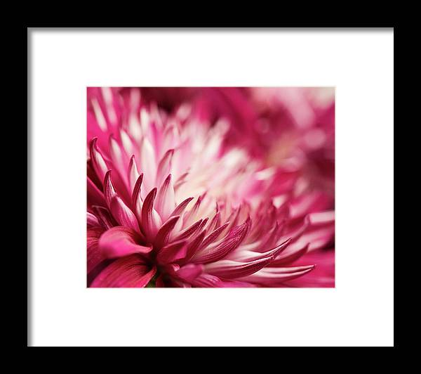 Petal Framed Print featuring the photograph Poised Petals by Jody Trappe Photography