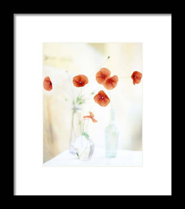 Vase Framed Print featuring the photograph Poppies In Vases by Victoria Pearson