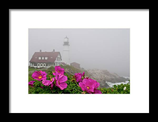 Built Structure Framed Print featuring the photograph Portland Headlight With Rosa Rugosa And by Www.cfwphotography.com