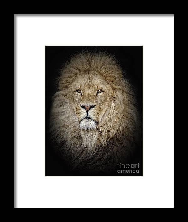 Big Cat Framed Print featuring the photograph Portrait Of Lion Against Black by Stephan Naumann / Eyeem