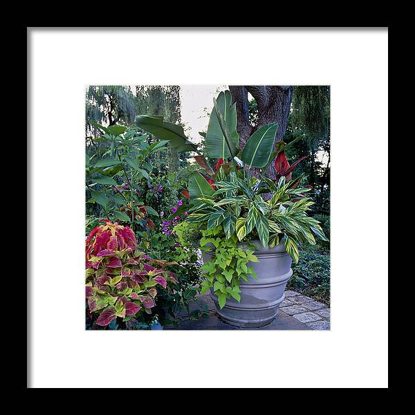 Bunch Framed Print featuring the photograph Potted Plants Including Bird Of by Richard Felber