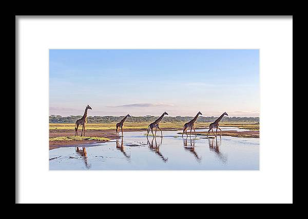 Framed Print featuring the photograph Procession by Alessandro Catta