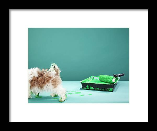 Pets Framed Print featuring the photograph Puppy Making Green Paw Prints From by Martin Poole