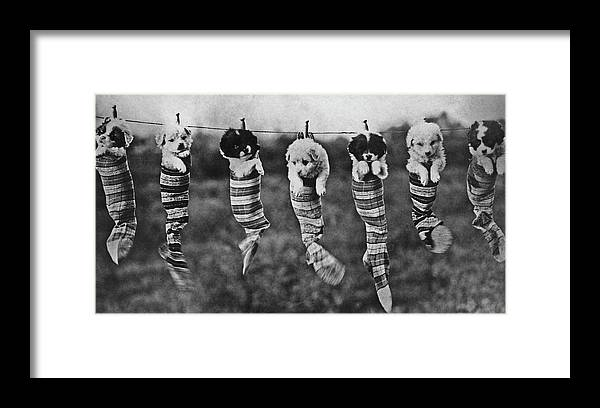 1929 Framed Print featuring the photograph Puppy Wash Day by Archive Photos